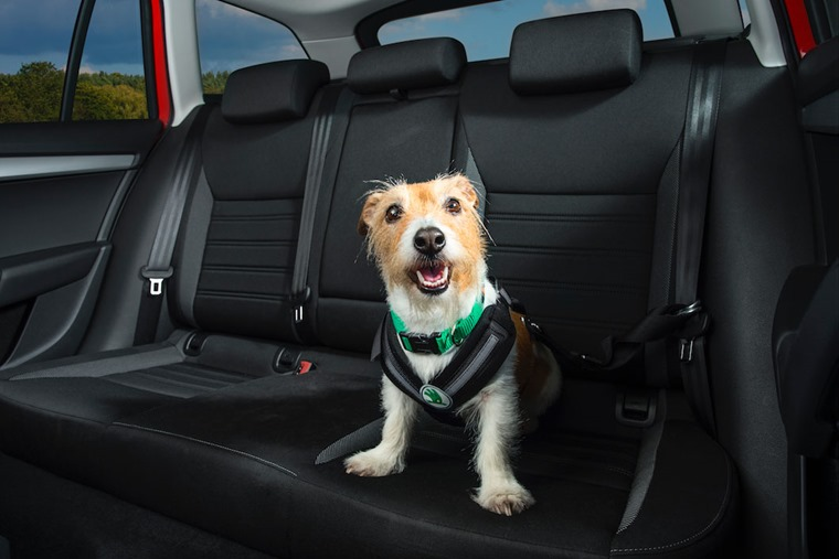Cool Dog in Cool Car