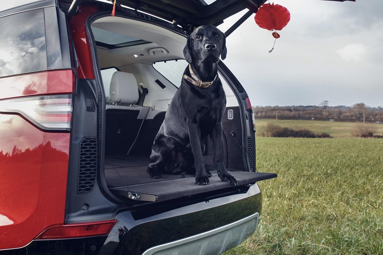 Land Rover Discovery dog